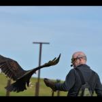 Bones the vulture 2